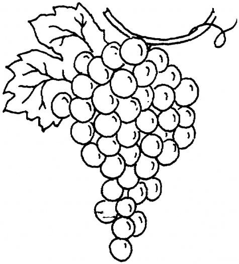 Outline Of Grapes