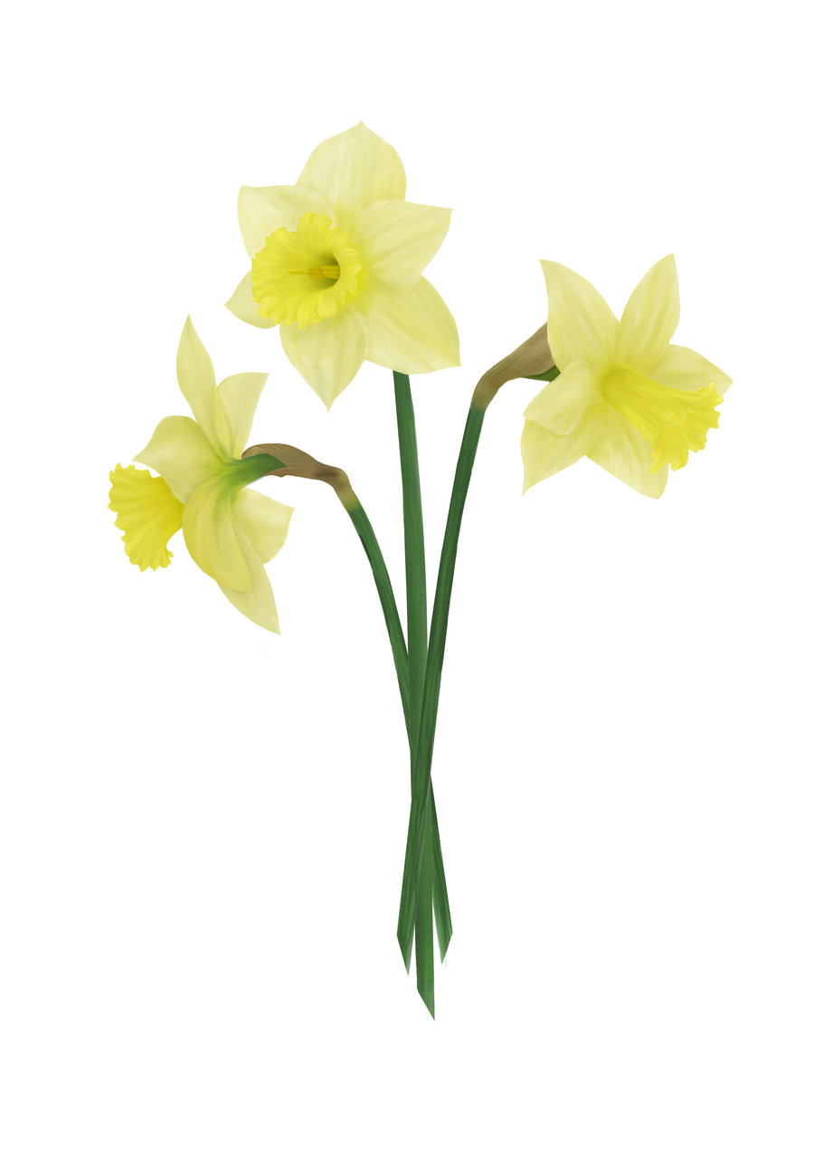 Daffodil Photoshop - ClipArt Best - ClipArt Best