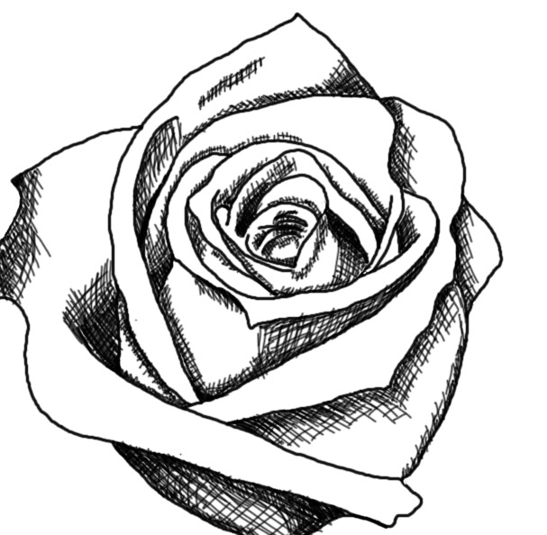 clipart roses black and white - photo #34