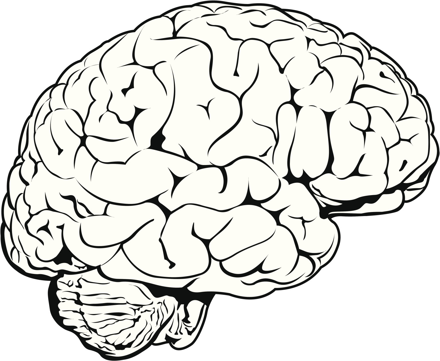 Human Brain Drawing at GetDrawingscom  Free for personal