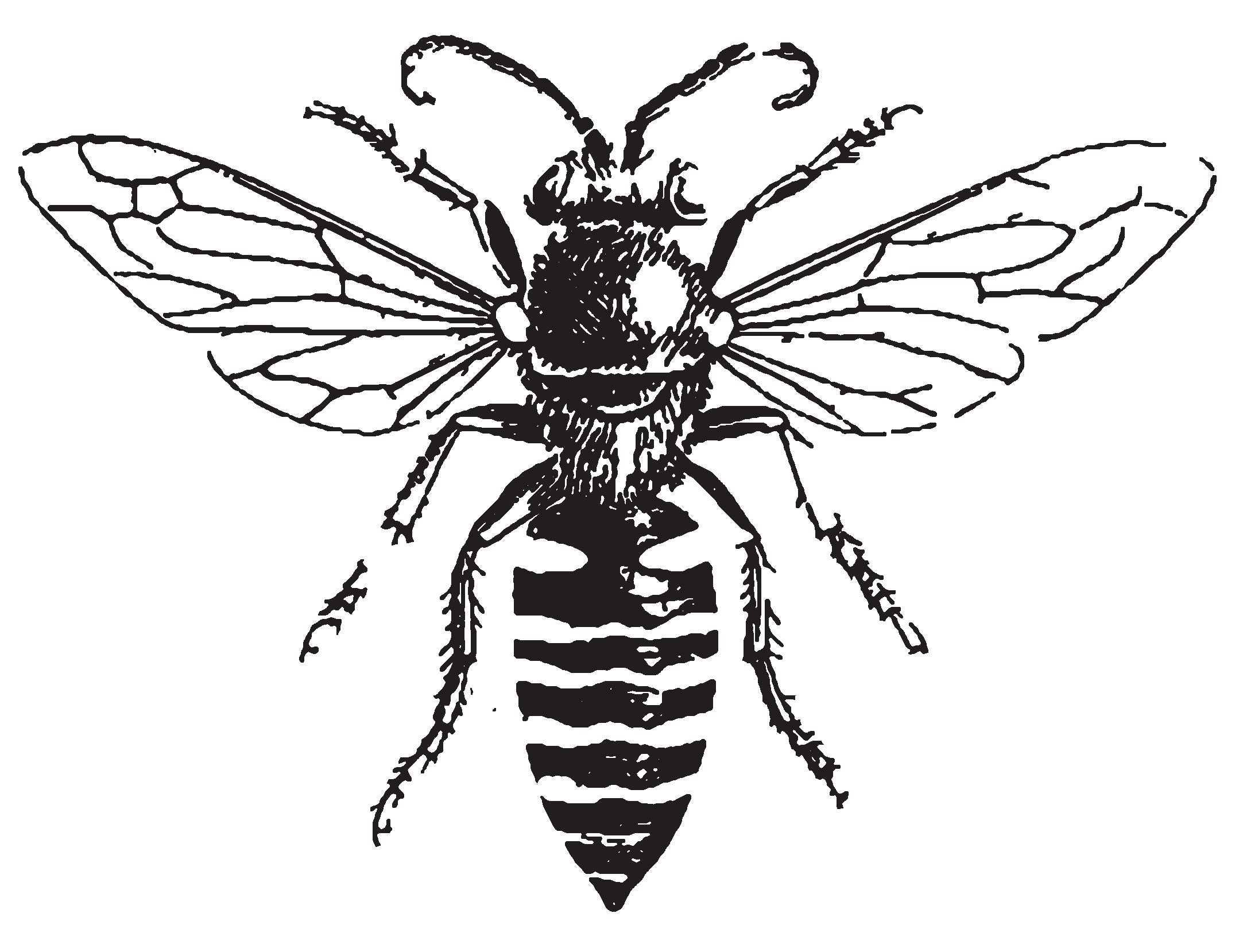 Line Drawing Insects : Honey bee drawing clipart best