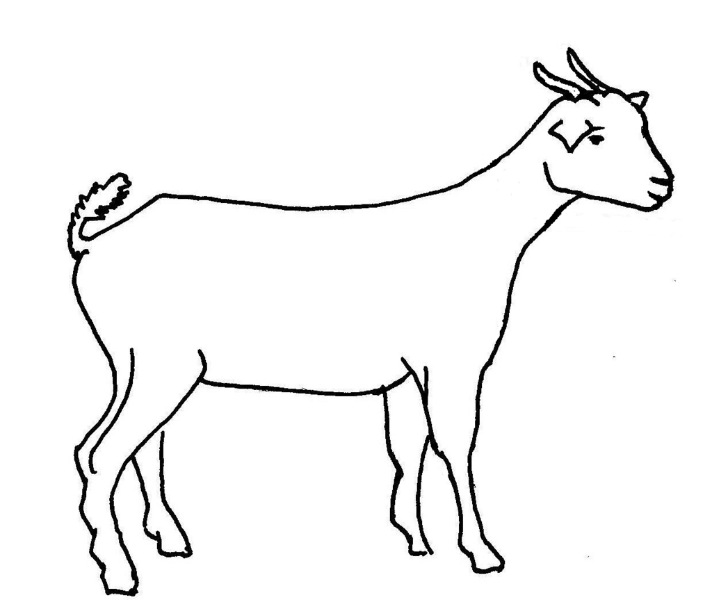 Line Drawing From Photo : Goat line drawing clipart best