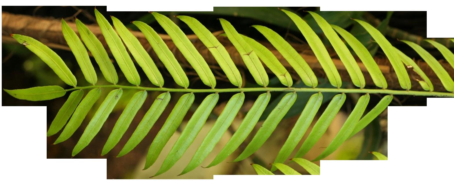 palm branches clip art clipart best palm sunday clip art for fb palm sunday clip art for fb