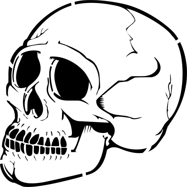 Human Skull Profile Clipart Best
