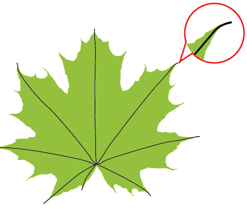 how to draw a simple maple leaf