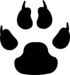 Jaguar animal paw - photo#17