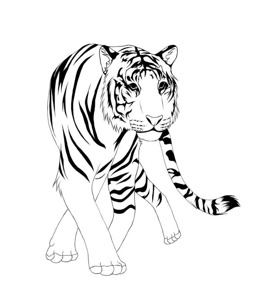 Line Drawing Tiger : Free line art drawings clipart best