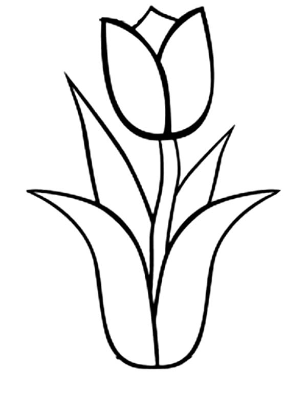 Line Drawing Tulip : Tulip flower line drawing