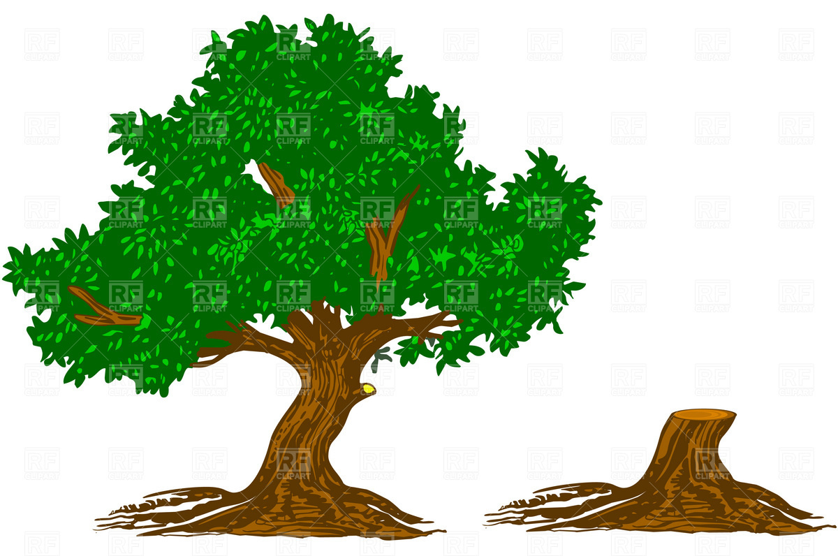 Free Oak Tree Pictures Download Clipart Best