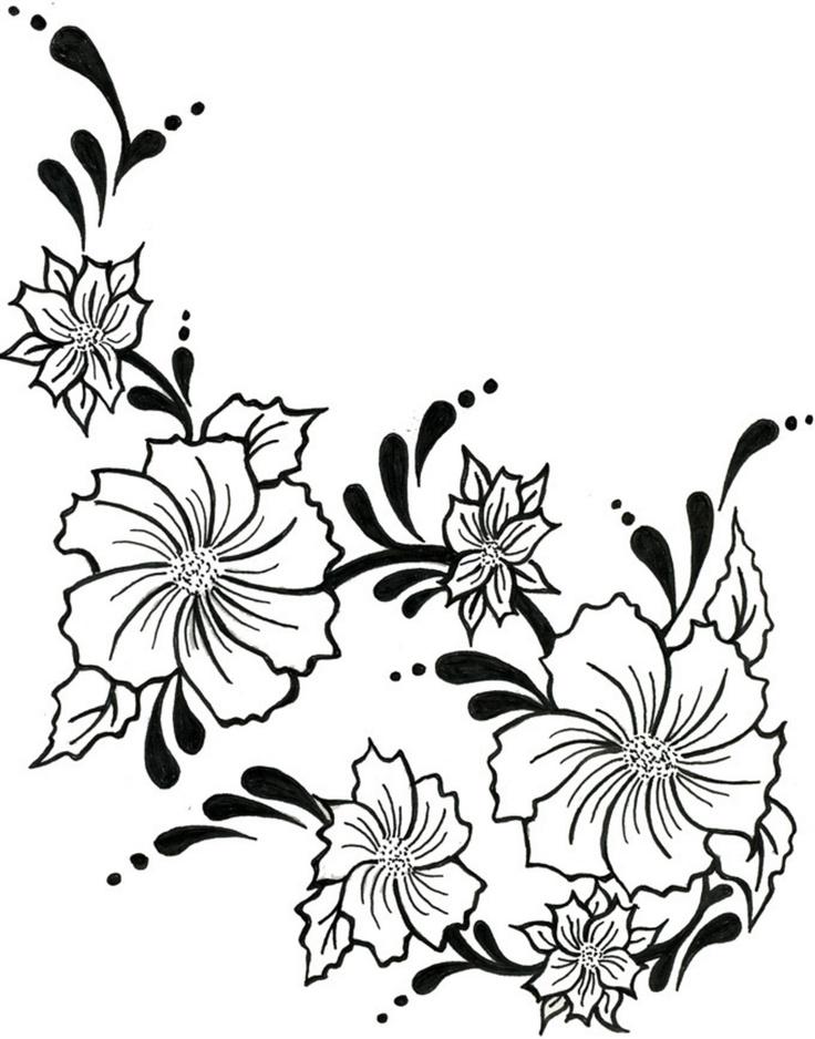 Flower Vine Line Drawing : Flowering vines drawing clipart best