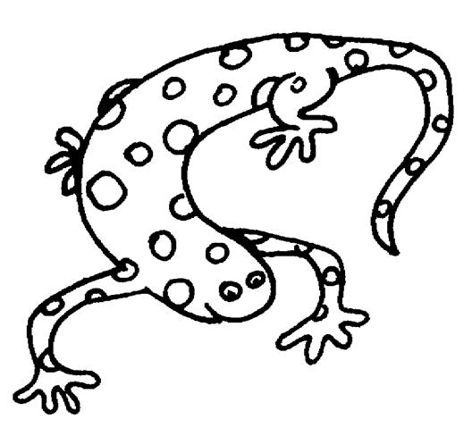 Reptiles Amphibians Coloring Pages ClipArt Best