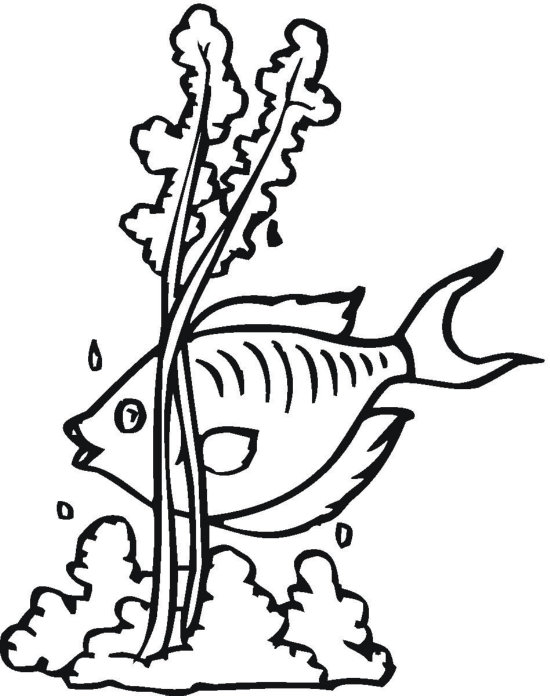 seaweed cartoon coloring pages - photo#18