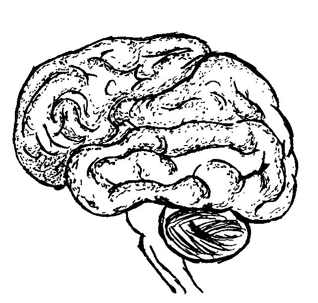 Line Art Brain : Brain line drawing clipart best