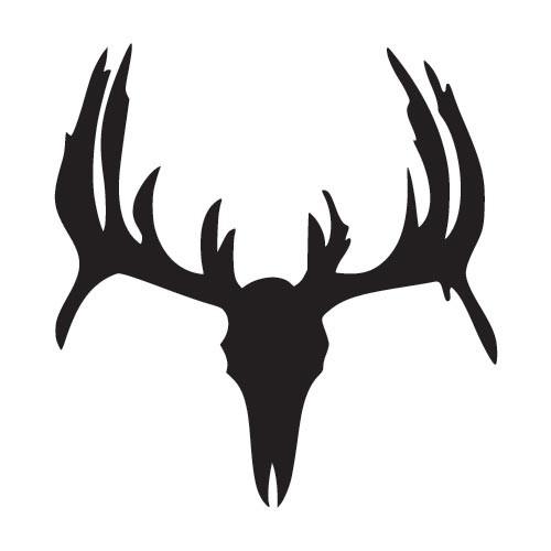 White Tail Deer Sckull Drawn: White Tailed Deer Skull
