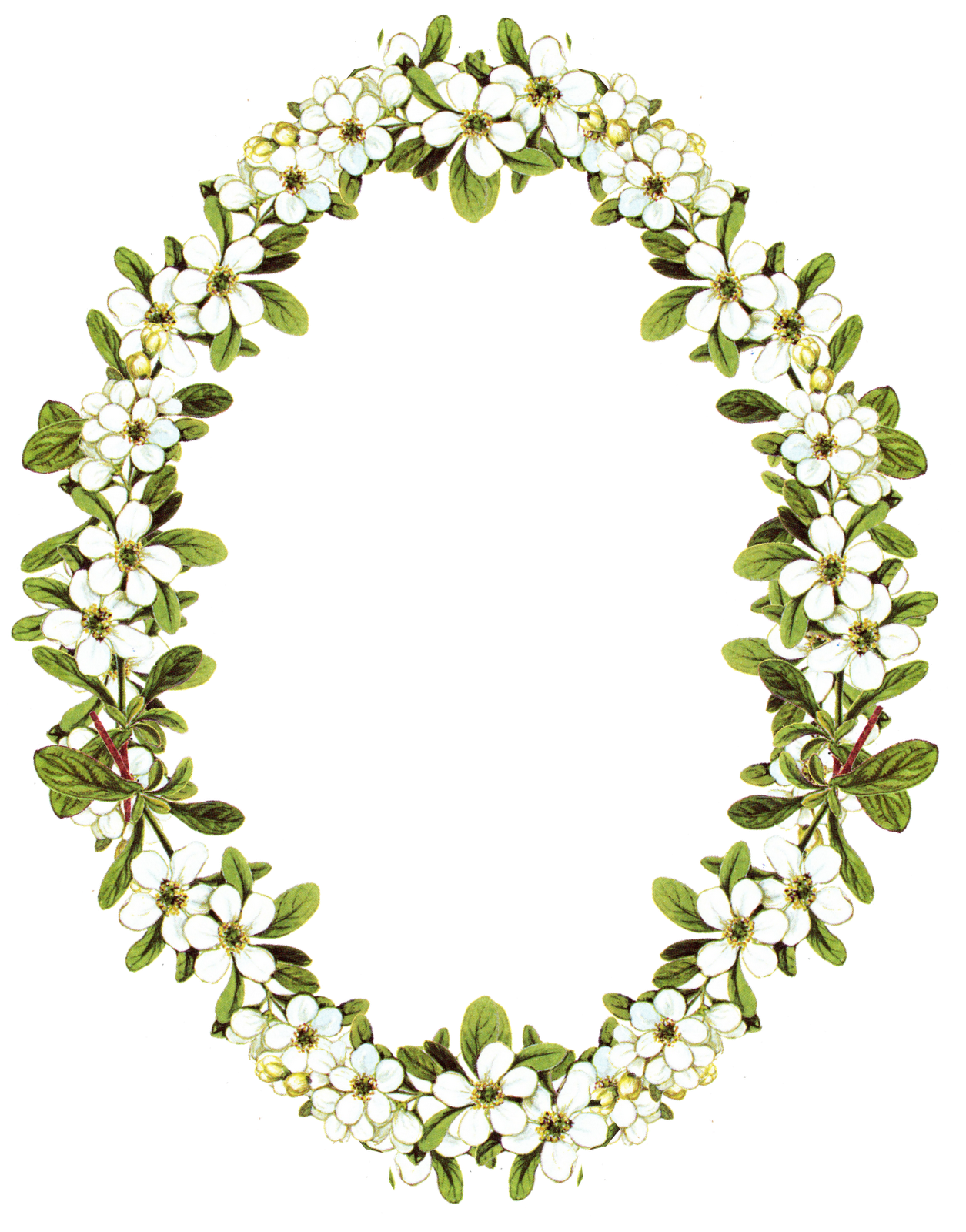 Flower Frame Png - ClipArt Best