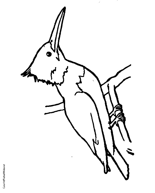 Kingfisher Outline Clipart Best