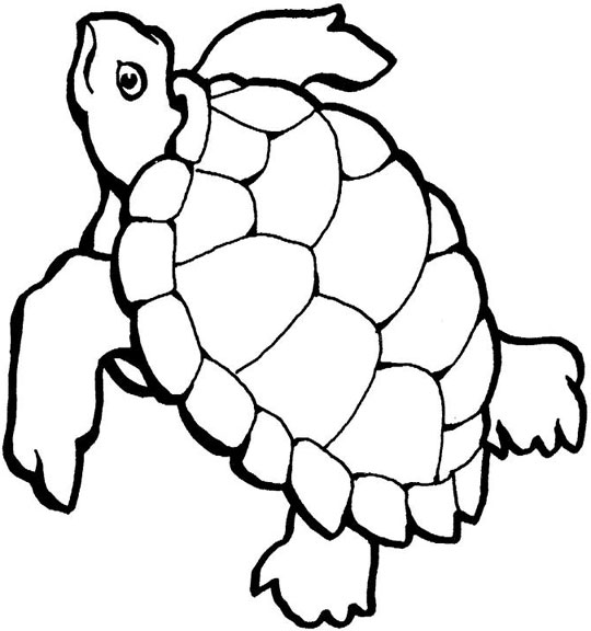 23 sea turtles cartoon . Free cliparts that you can download to you ...
