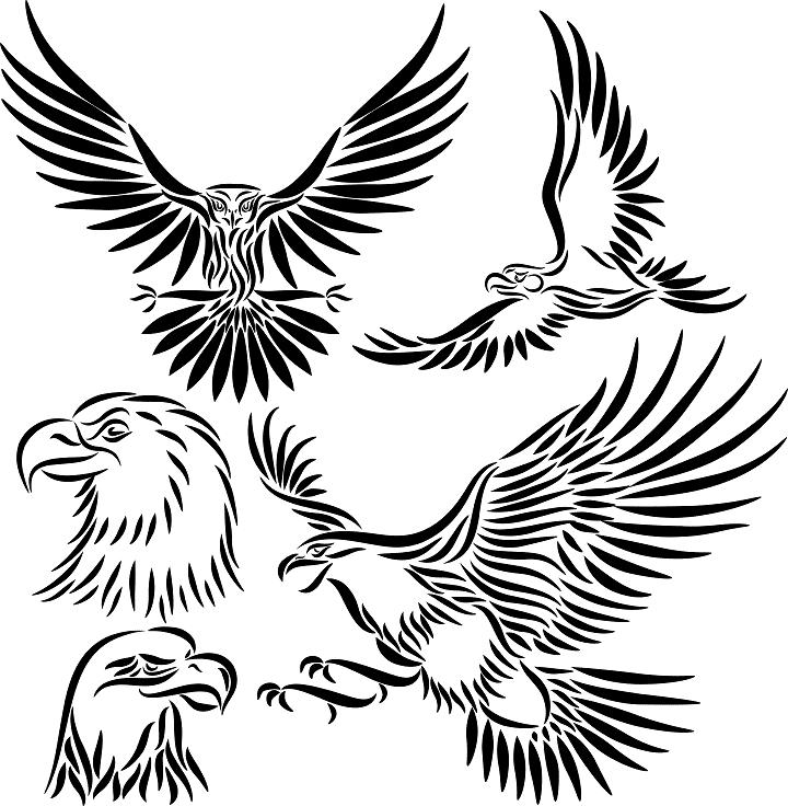 Eagle Tattoo Line Drawing : Polish eagle tattoo designs clipart best