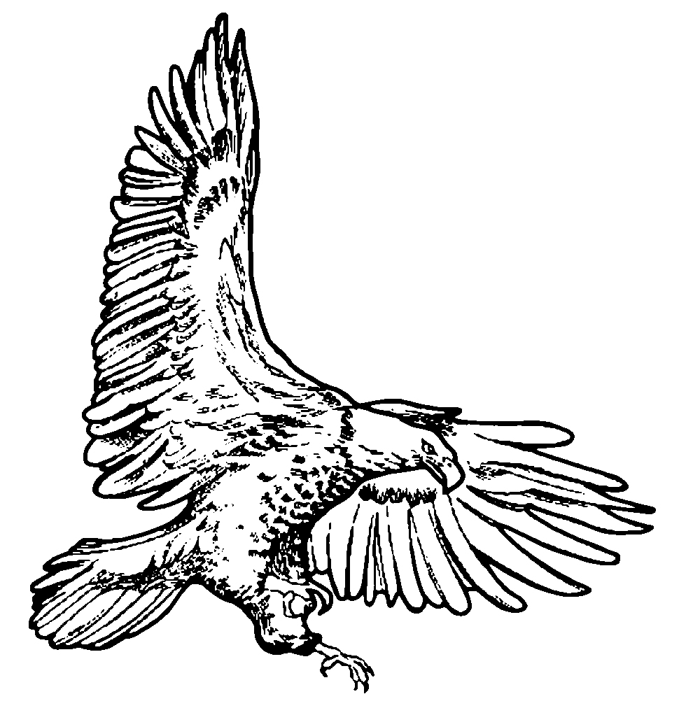 Line Art Clipart : Eagle line drawing clipart best