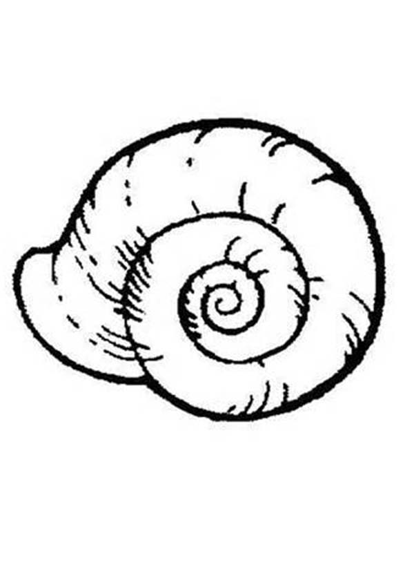 free coloring pages sea shells - photo#23