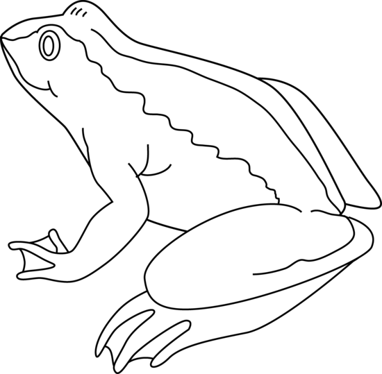 Frog Draw Black And White - ClipArt Best