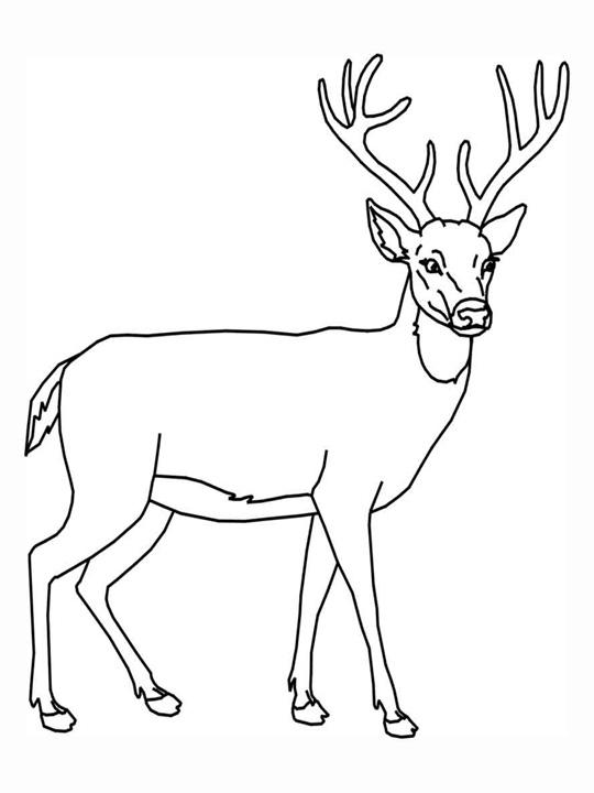 Line Drawing Deer : Line drawing of a deer clipart best