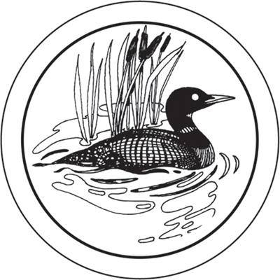 Loon Drawings - ClipArt Best