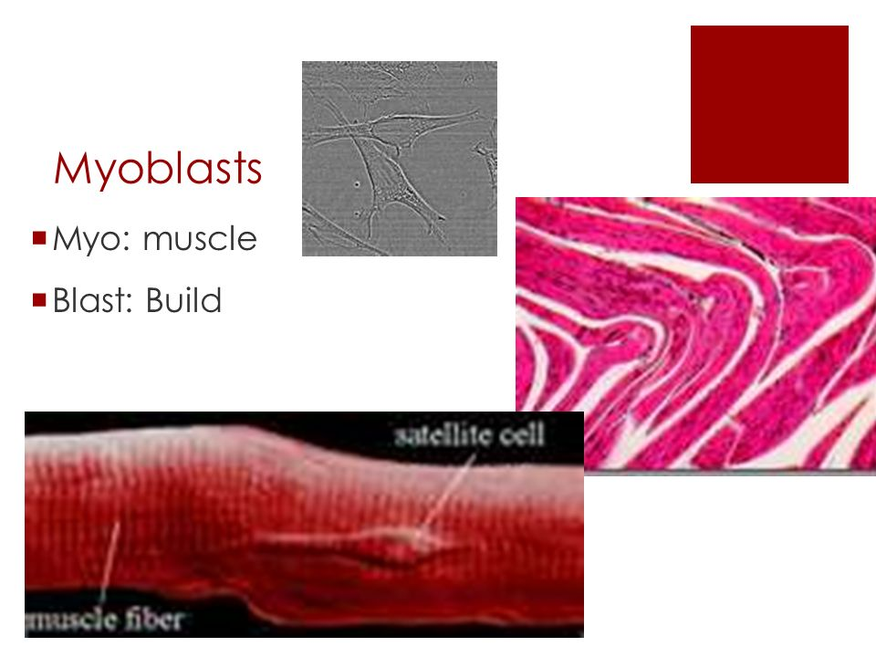 Skeletal Muscle Unit Chapter 6. Functions of skeletal muscles ...