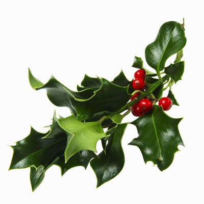 11 mistletoe clip art free cliparts that you can download to you ...