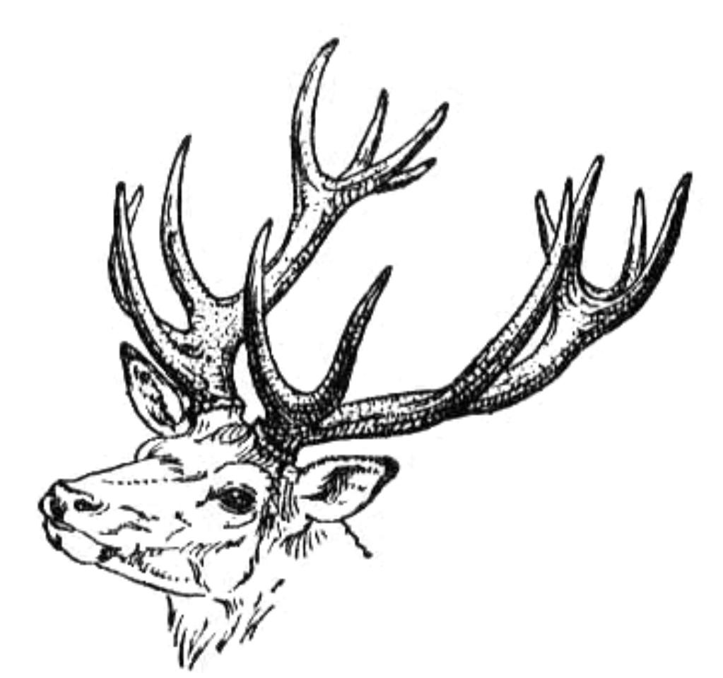 Deer Clip Art - ClipArt Best