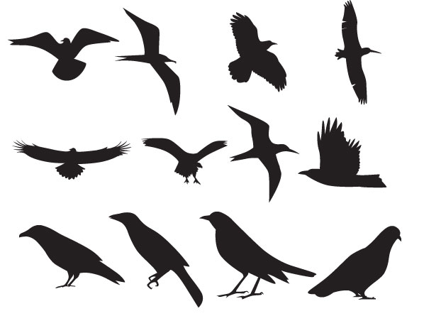 Bird Vector - ClipArt Best