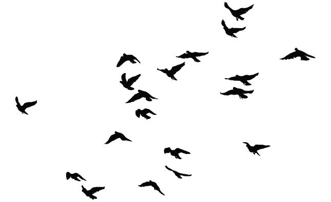 Bird Flock Silhouette Clipart Best