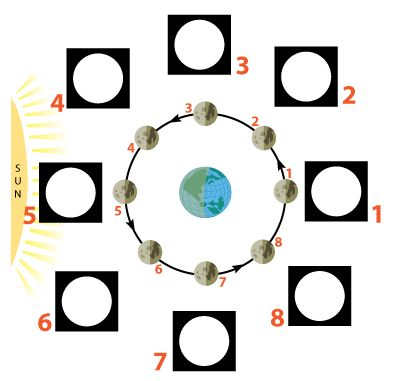 blank phases of moon diagram clipart best. Black Bedroom Furniture Sets. Home Design Ideas