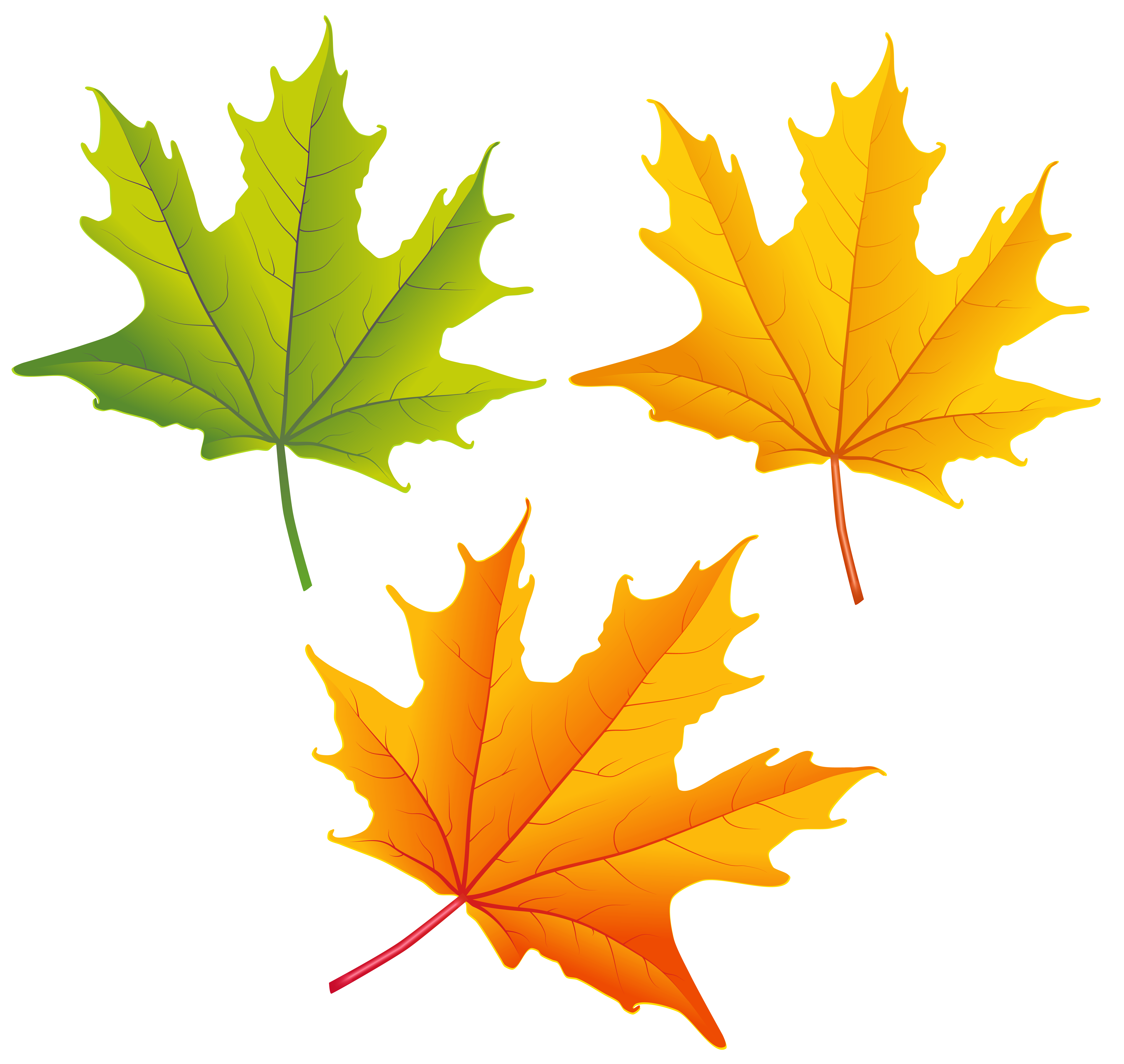Clip Art Autumn Leaves Yellow - ClipArt Best