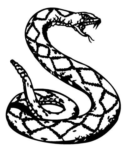 Viewtopic php furthermore Roses Window Cliparts moreover Rattlesnake Drawing as well  on rattler head clip art