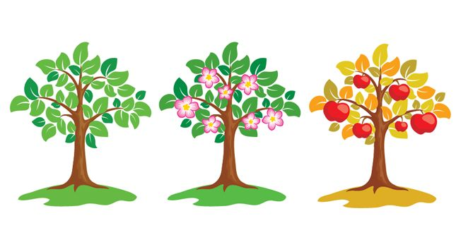 free fruit tree clipart - photo #49