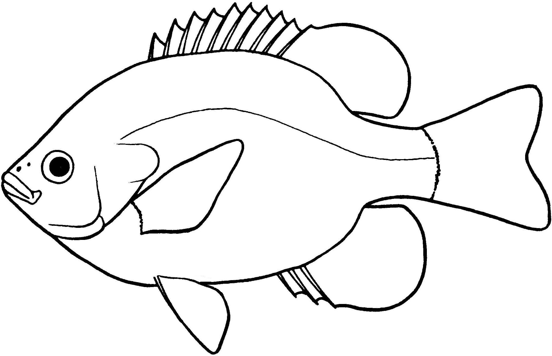 D Line Drawings Locations : Bass fish drawings clipart best