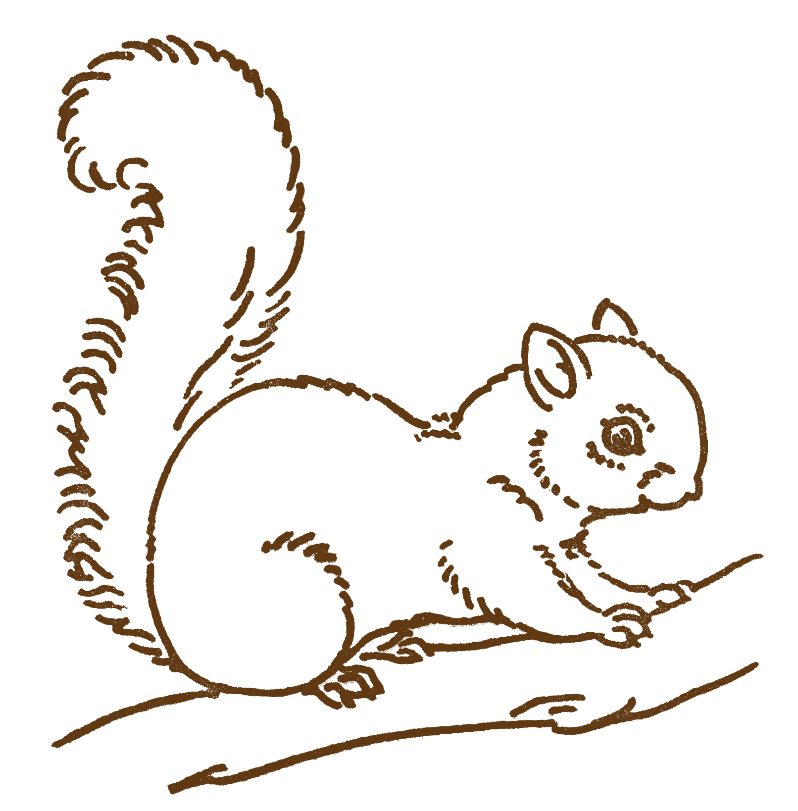 Line Drawing In Computer Graphics : Squirrel drawing clipart best