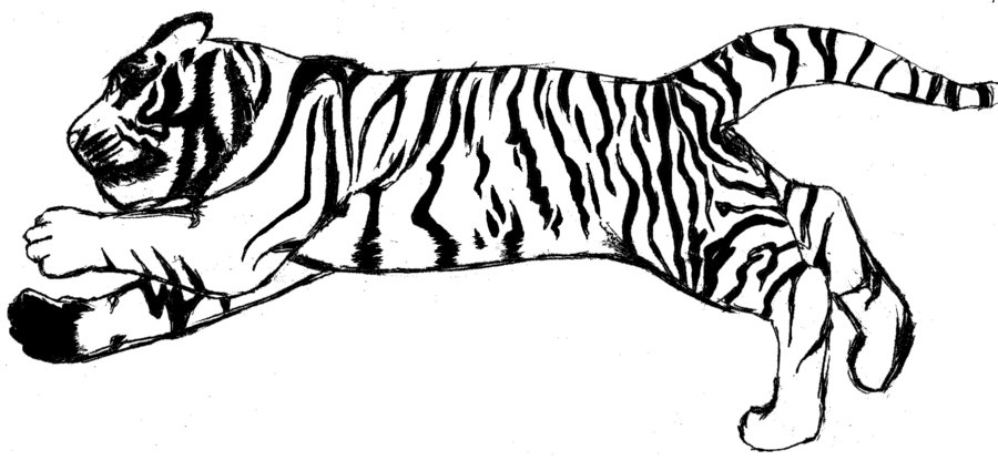 Clip Art Tiger Clipart Black And White suggestions online images of tiger clip art black and white tiger