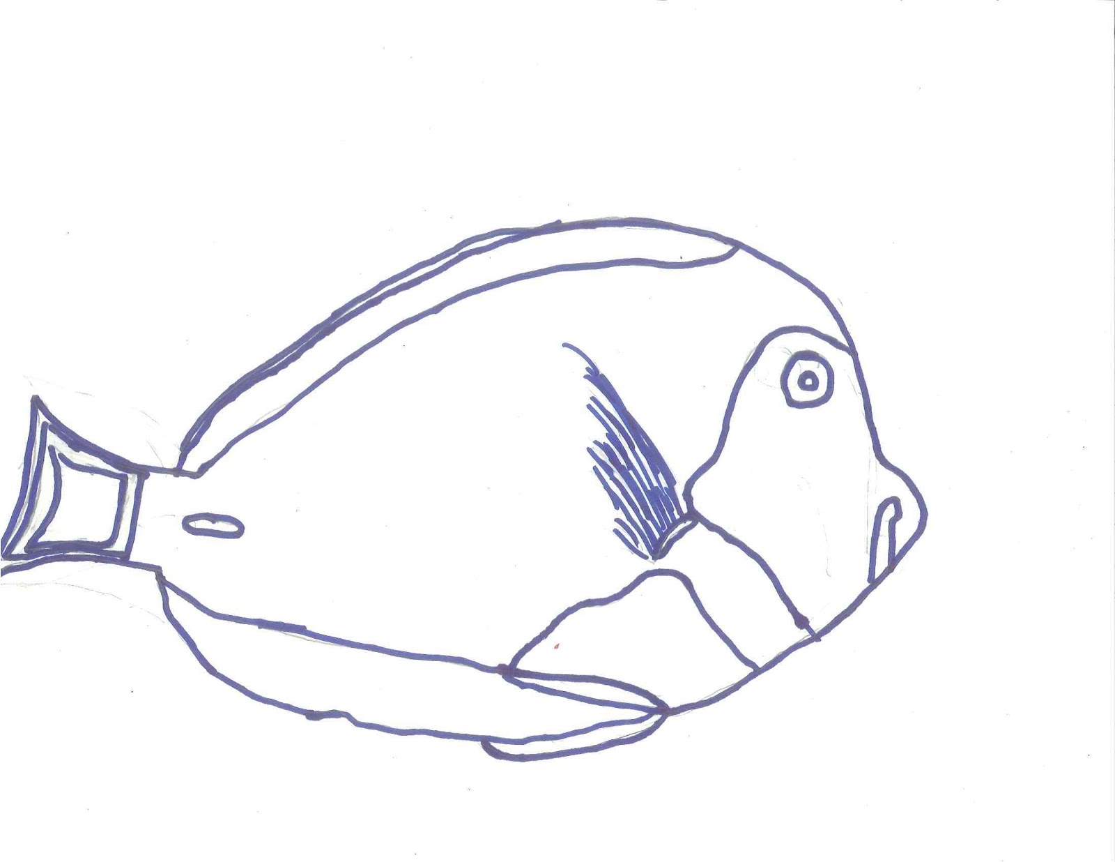Line Drawing From Photo : Fish line drawings clipart best