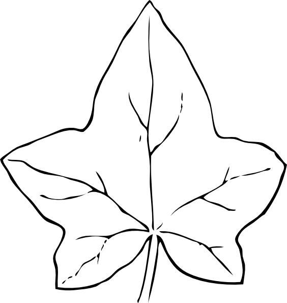 Maple Leaf vs Oak Leaf Oak Leaf Template Fall Birch