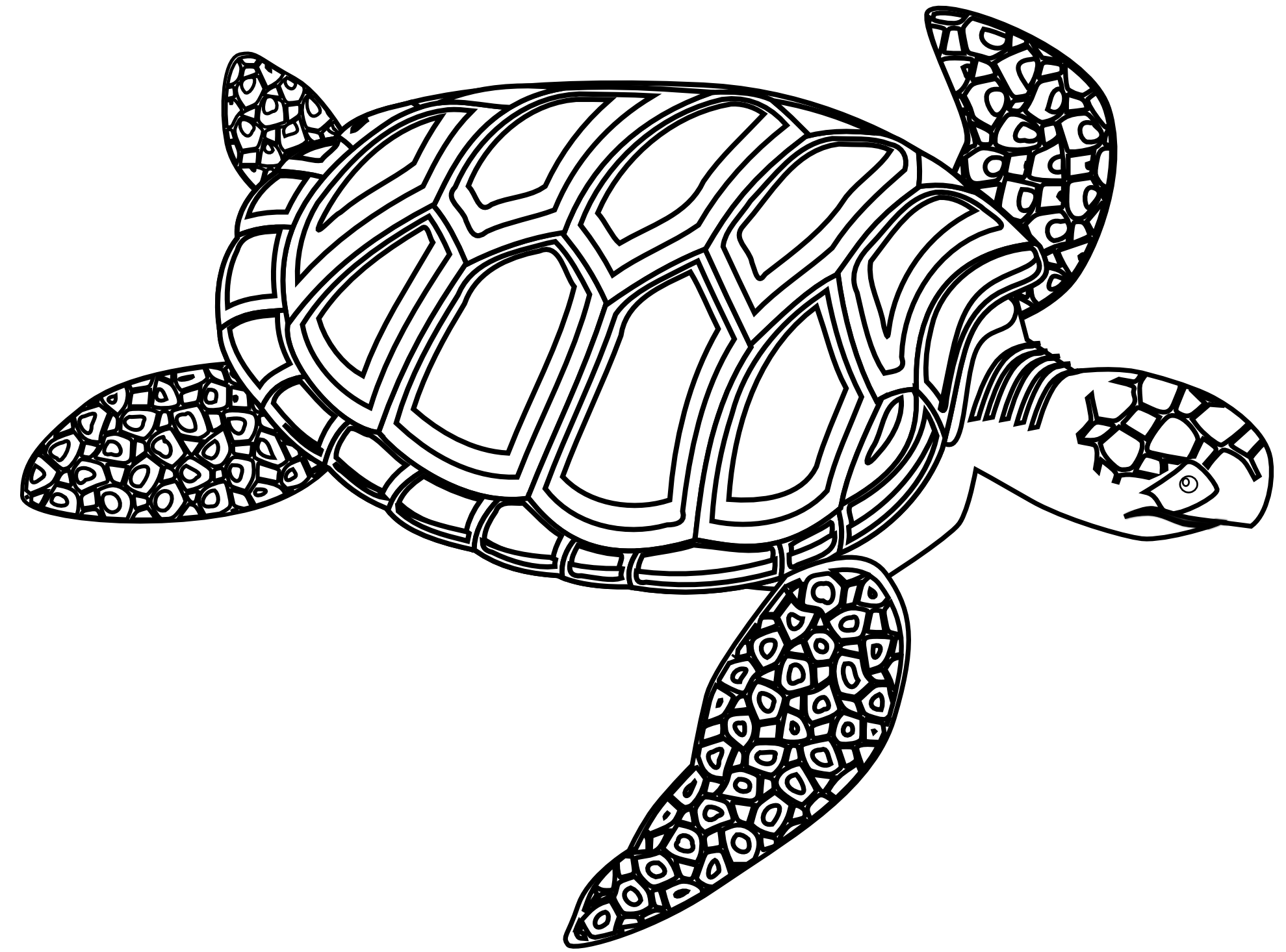 Line Drawing Turtle : Clip art green sea turtle black white line clipart