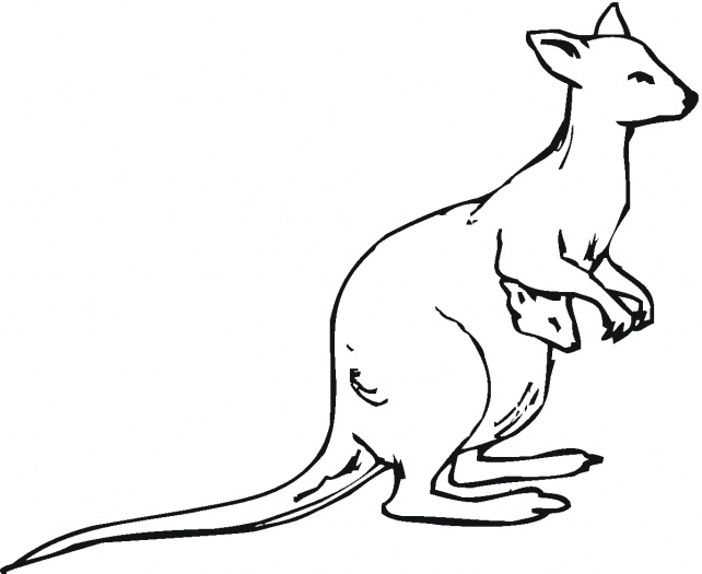 Line Drawing Kangaroo : Kangaroo outline to colour clipart best
