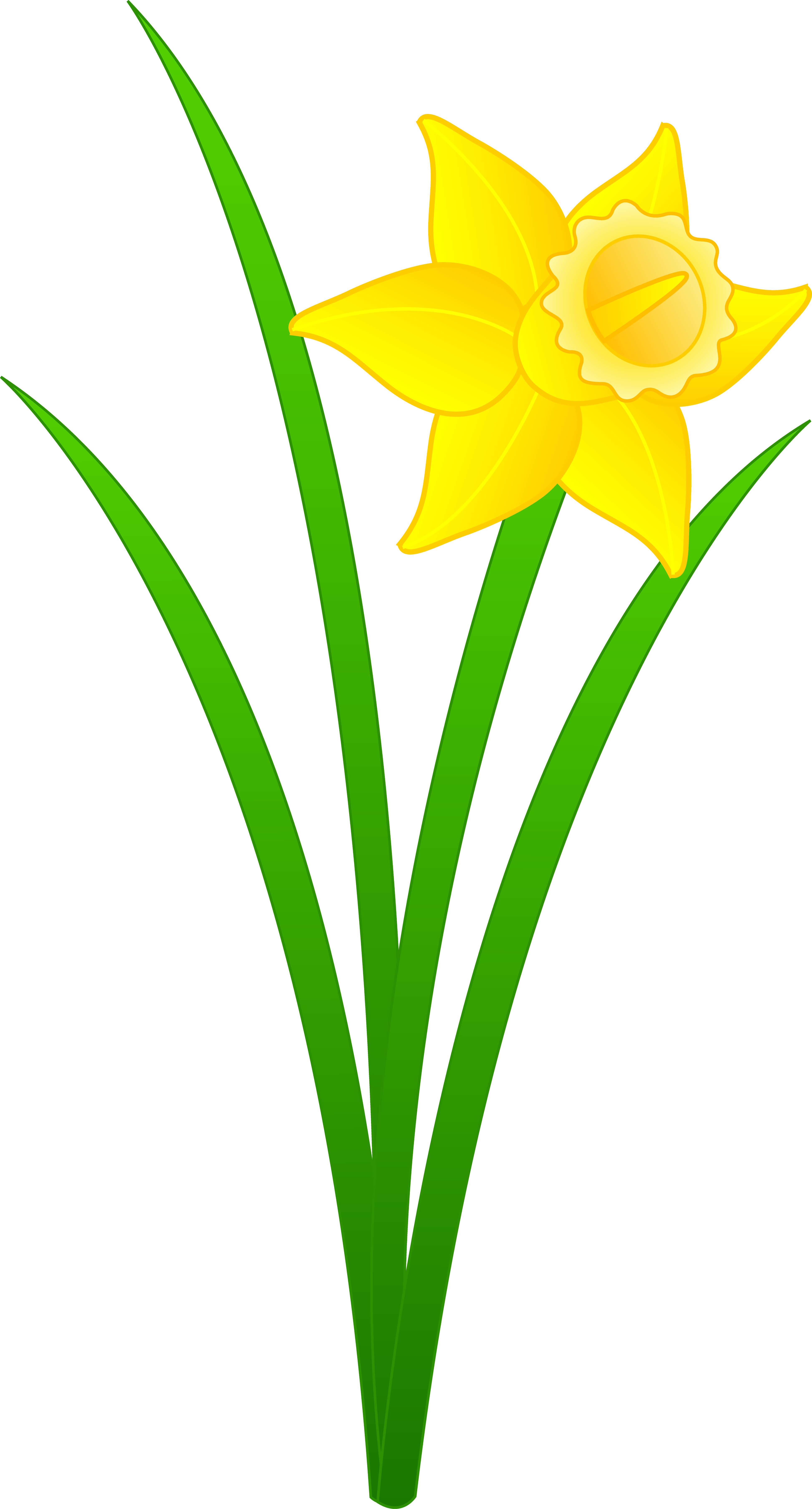 Narcissus Flower Drawing - ClipArt Best