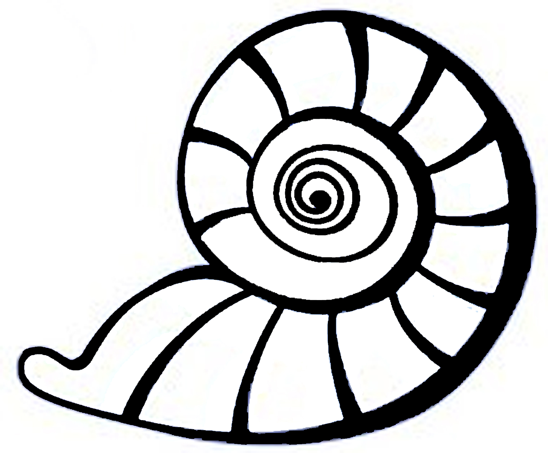 Drawing Seashells - ClipArt Best