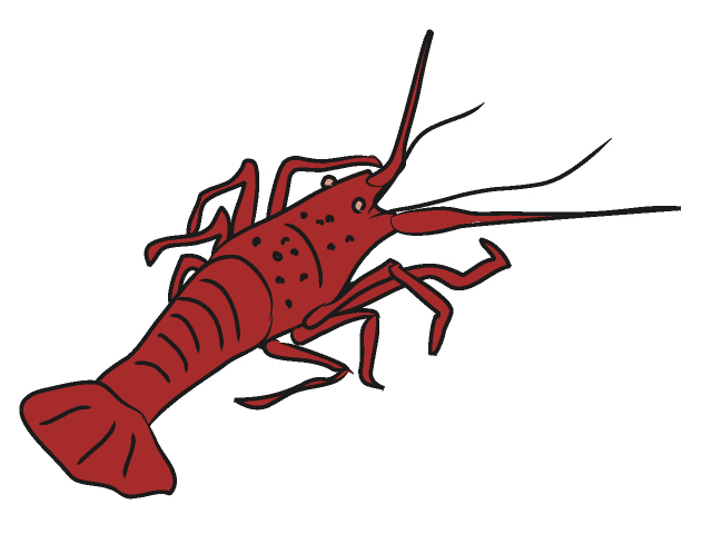 funny lobster clipart - photo #24