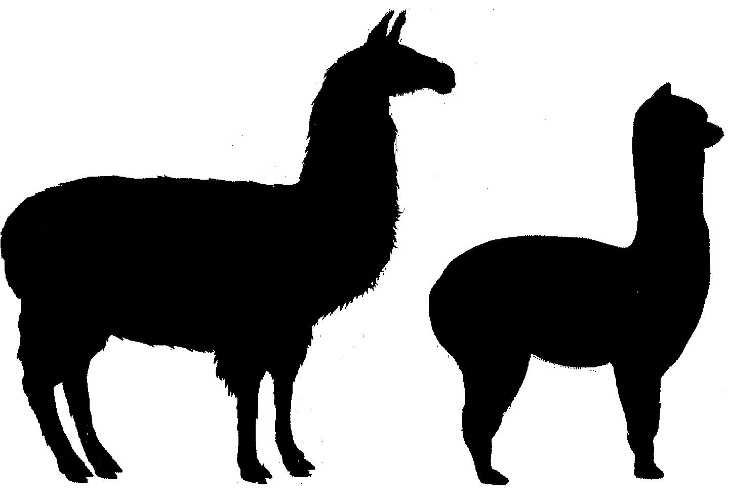 ... -alpacas.co.uk All About Alpacas - ClipArt Best - ClipArt Best