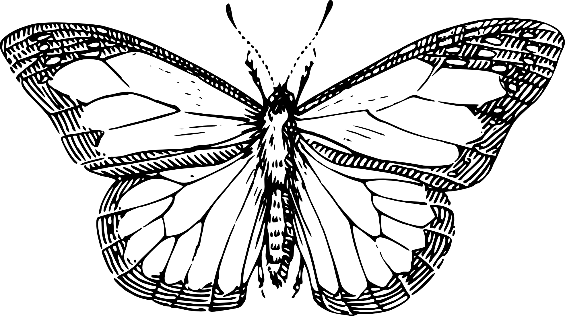 Contour Line Drawing Butterfly : Butterfly line drawing clipart best