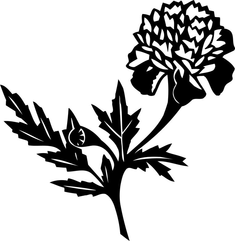 Marigold Flower Line Drawing : Line drawing of a marigold clipart best