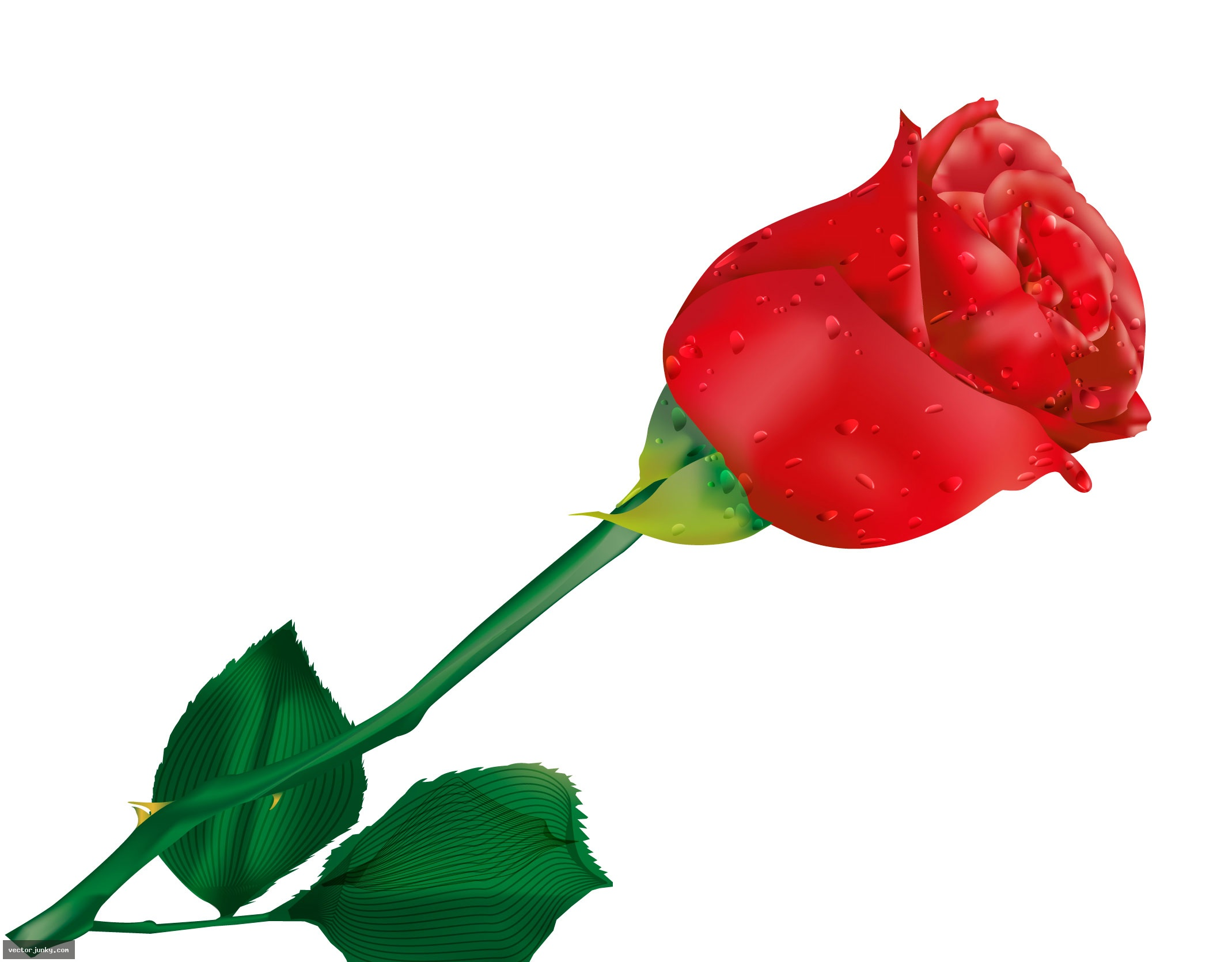 red roses clipart - photo #11